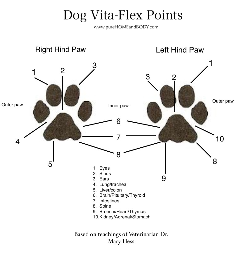 Essential Oils For Pets Pure Home And Body Llc