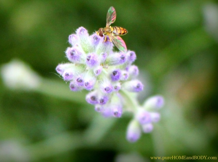 Homemade remedies for insect stings