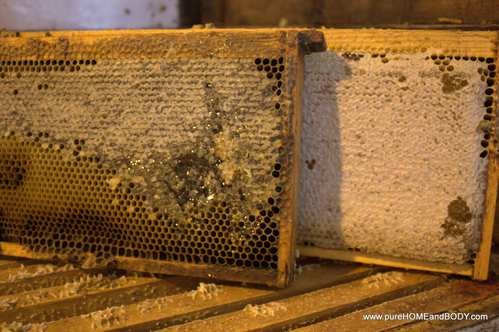 Full honeycomb is carefully harvested so the bee hive is left with enough food